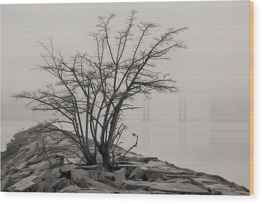 Solitary  Wood Print by JC Findley