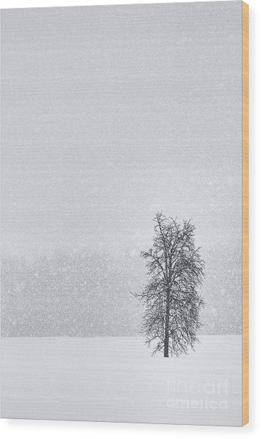 Solitude II Wood Print