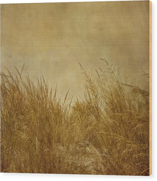 Wood Print featuring the photograph Solitude by Kim Hojnacki