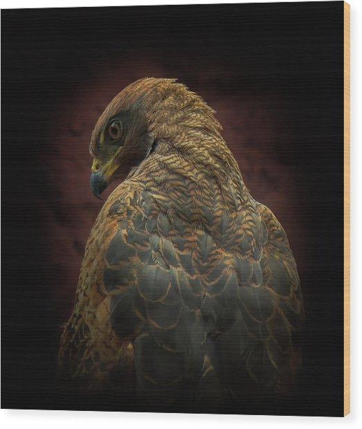 Somebody Watch Me-savanna Hawk Wood Print