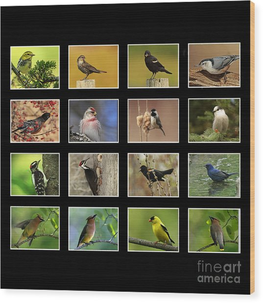 Song Birds Of Canada Collection Wood Print