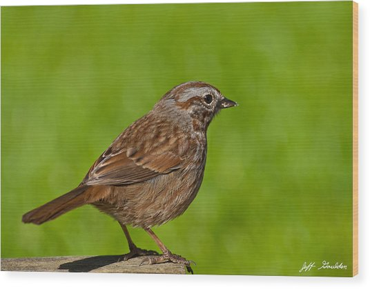 Song Sparrow On A Log Wood Print