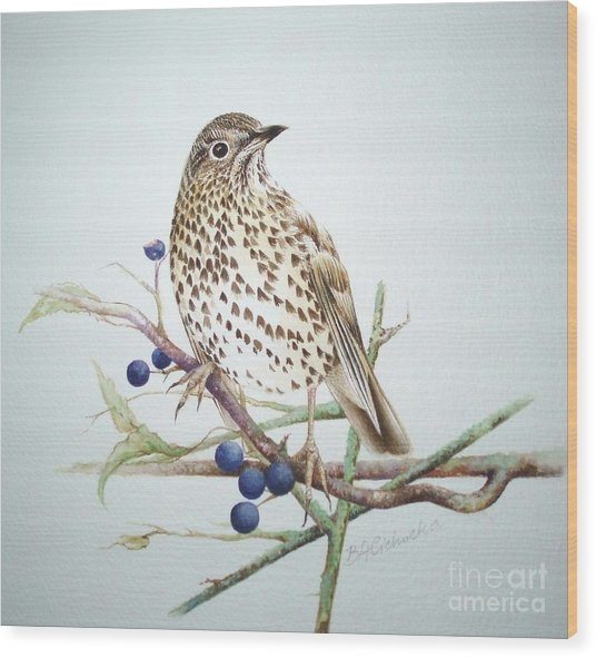 Song Thrush / Sold Wood Print