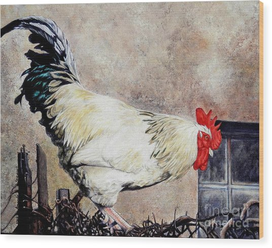 Sonoma Rooster Wood Print by Amanda Hukill