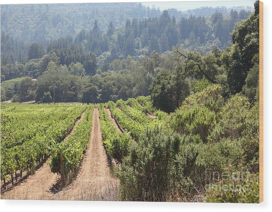 Sonoma Vineyards In The Sonoma California Wine Country 5d24518 Wood Print by Wingsdomain Art and Photography