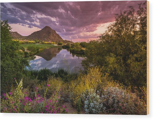 Sonoran Desert Spring Bloom Sunset  Wood Print