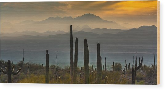 Sonoran Desert Sunset Wood Print