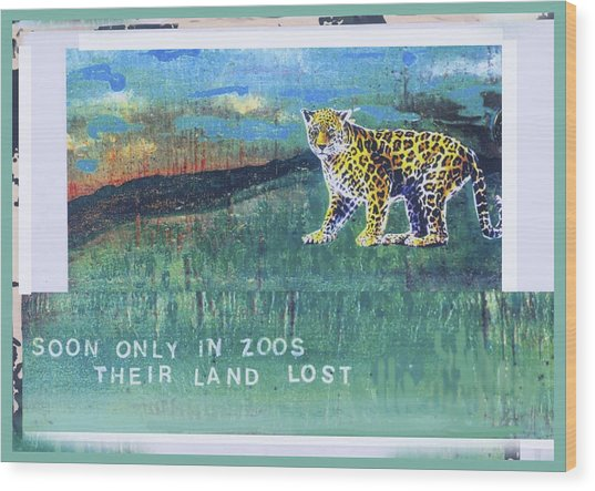 Soon Only In Zoos  Their Land Lost Wood Print by Mary Ann  Leitch