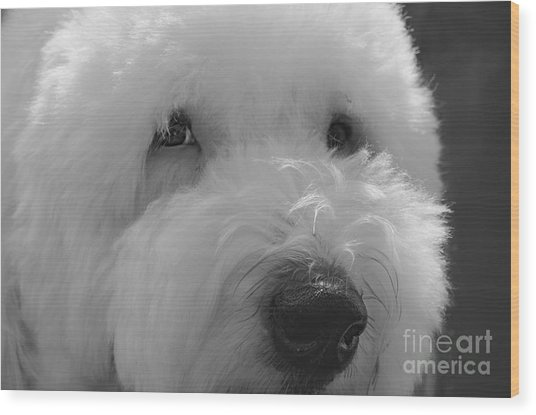 Soulful Eye's Old English Sheep Dog Wood Print
