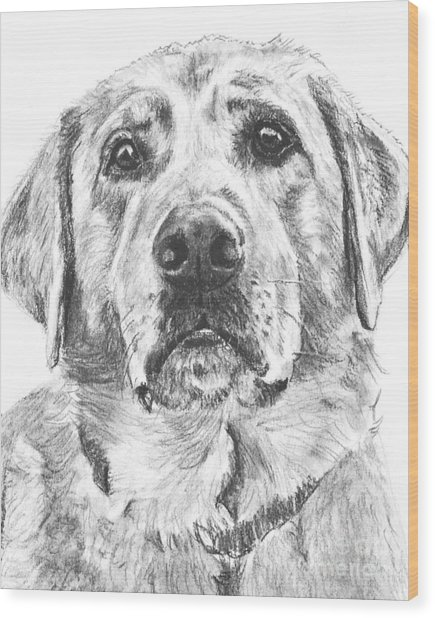 Soulful Lab Face Wood Print