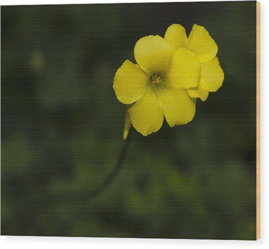 Sour Grass Wood Print