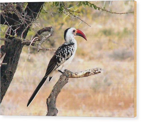 South African Hornbill Wood Print