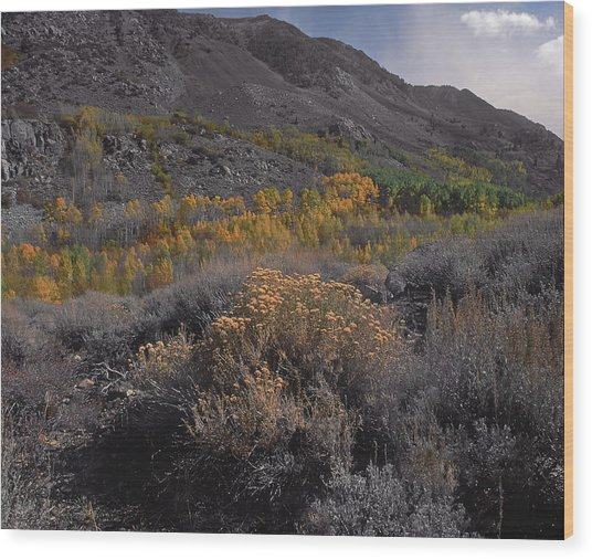 South Fork Valley Gold Wood Print
