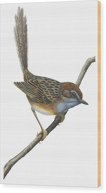 Southern Emu Wren Wood Print