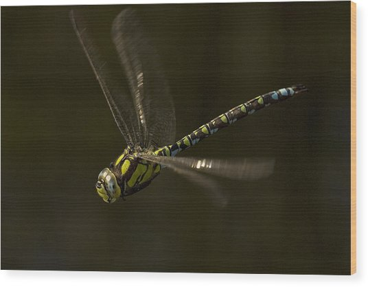Southern Hawker Dragonfly In Flight Wood Print