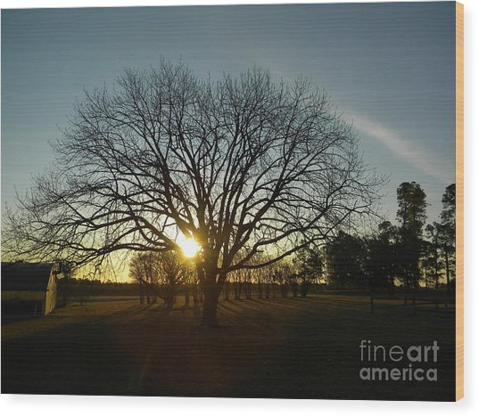 Southern Sunrise Special Wood Print