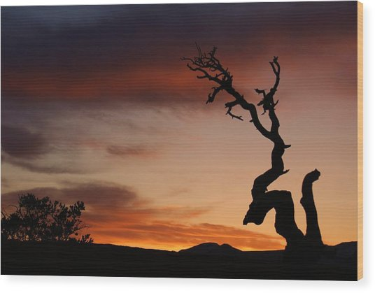 Southwest Tree Sunset Wood Print