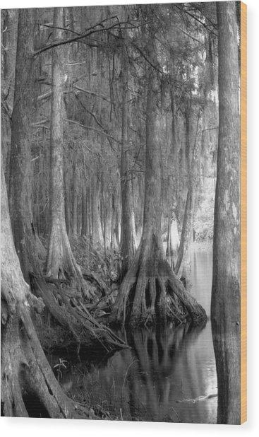 Spanish Moss And Pond Cypress. Shingle Creek. Wood Print