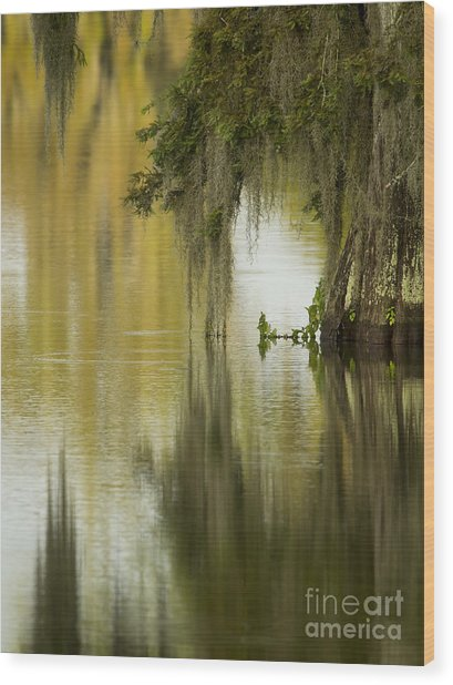 Spanish Moss Reflections Wood Print by Kelly Morvant