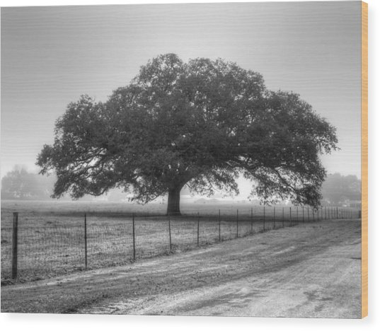 Spanish Oak Black And White Wood Print