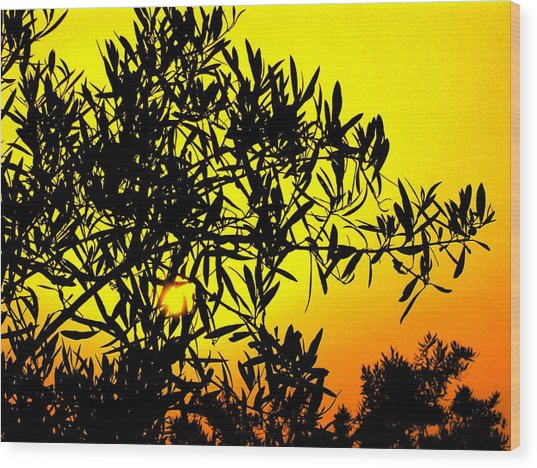 Spanish Sunshine - Espana Wood Print by Jacqueline M Lewis