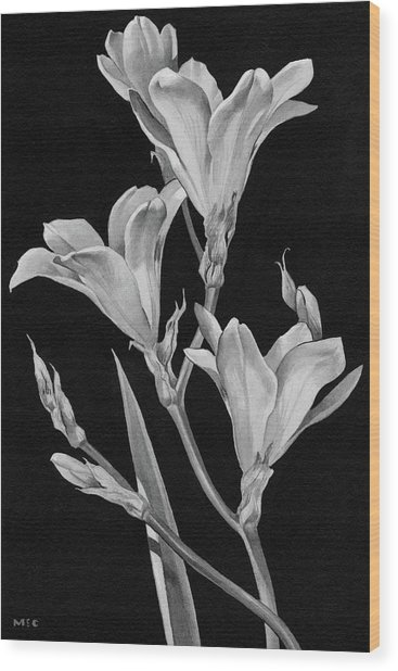 Sparaxis Flowers Wood Print
