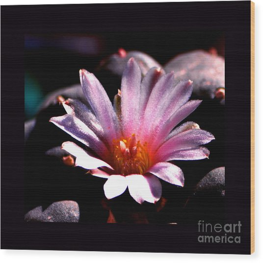 Sparkling Peyote Flower Wood Print