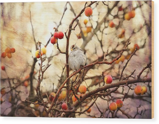 Sparrow In A Crab Apple Tree Wood Print