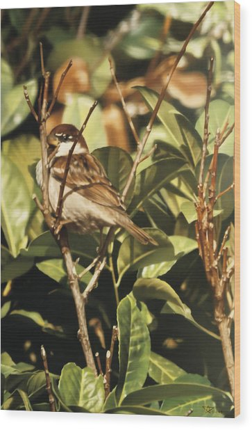 Sparrow On The Branch Wood Print by Alberto Ponno