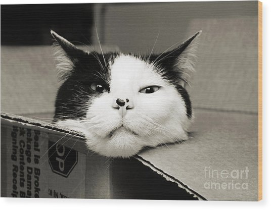 Special Delivery It's Pepper The Cat  Wood Print