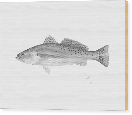 Speckled Trout - Scientific Wood Print