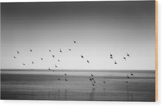 Spectacle Of Flight Wood Print