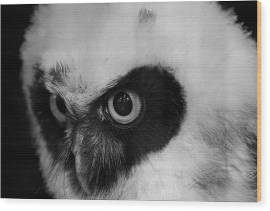 Spectacled Owl Wood Print by Simon Gregory