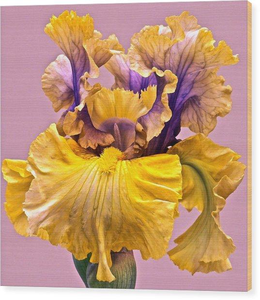 Spectacular Iris Close Up Wood Print