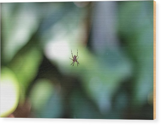 Spider Bokeh Wood Print by Rick Starbuck
