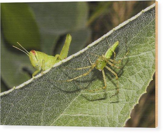 Spider-grasshopper Standoff Wood Print