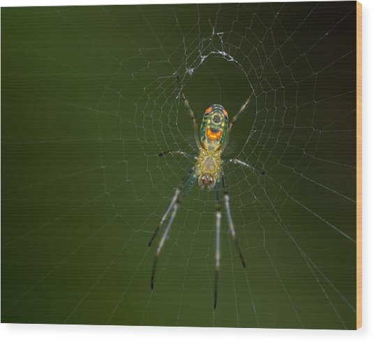 Spider In Mexico Wood Print by Brian Magnier