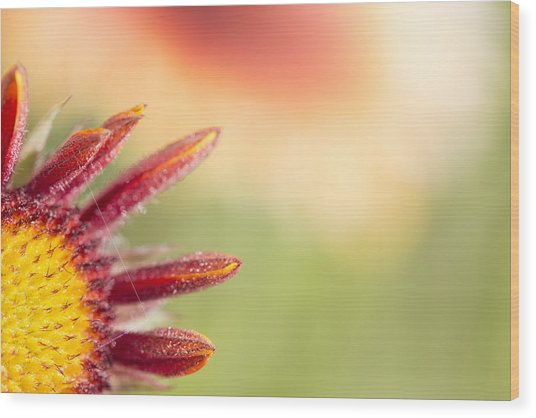 Spider's Stitch On Blanket Flower Wood Print