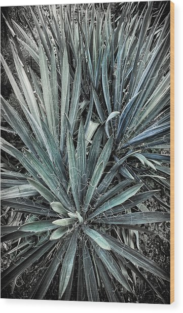 Spiky Blue-green Plant Wood Print