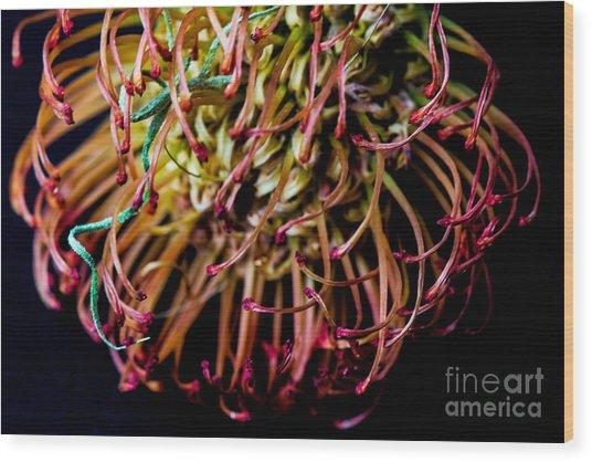Spiky Flower Wood Print by Mina Isaac