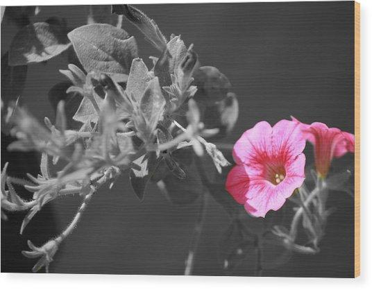 Splash Of Pink Wood Print by Kimberly Elliott