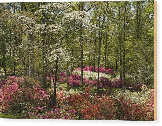 Splendor - Azalea Garden Wood Print