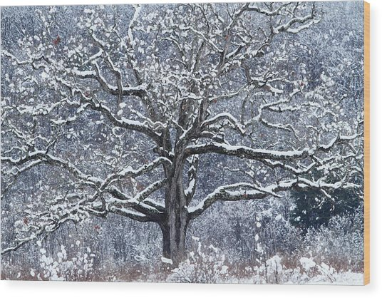 Splendor Wood Print