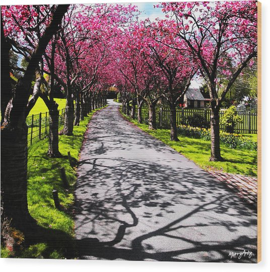Splendour 2 Wood Print