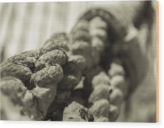 Spliced And Bound Black And White Sepia Wood Print
