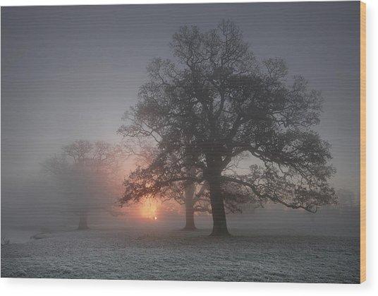 Spooky Misty Morning  Wood Print