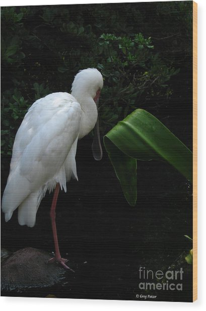 Spoonbill Morning Wood Print by Greg Patzer