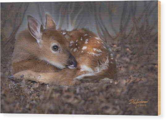 Spotted Innocence Wood Print by Don Anderson