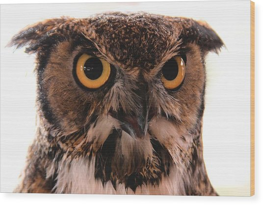 Spotted Owl 1 Wood Print