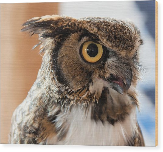 Spotted Owl 2 Wood Print